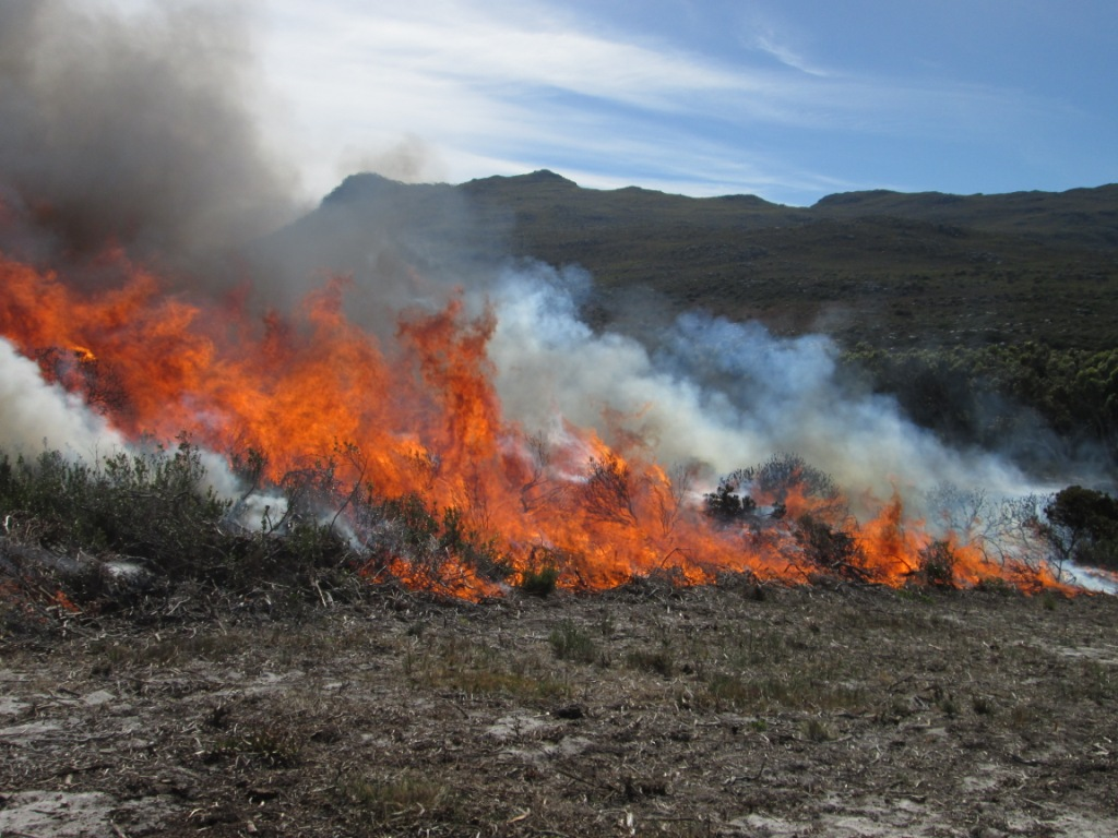 Cape Point Prescribed Burn 2014