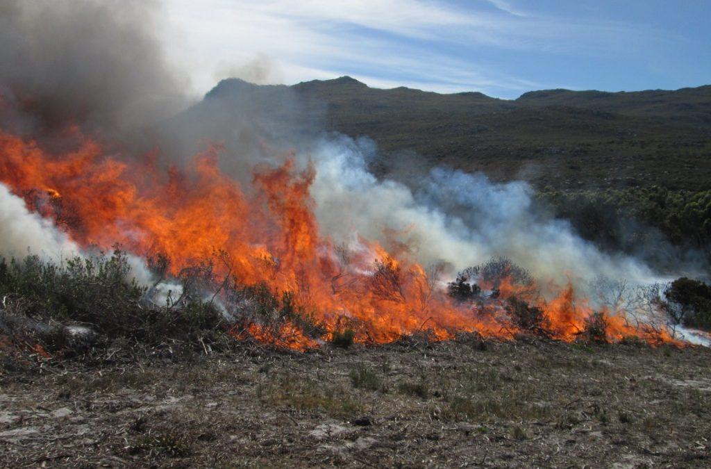 Basic Wildfire Suppression Training